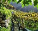 discovering-madeira-imageLinkrapariga-nas-vinhas-1280x7201